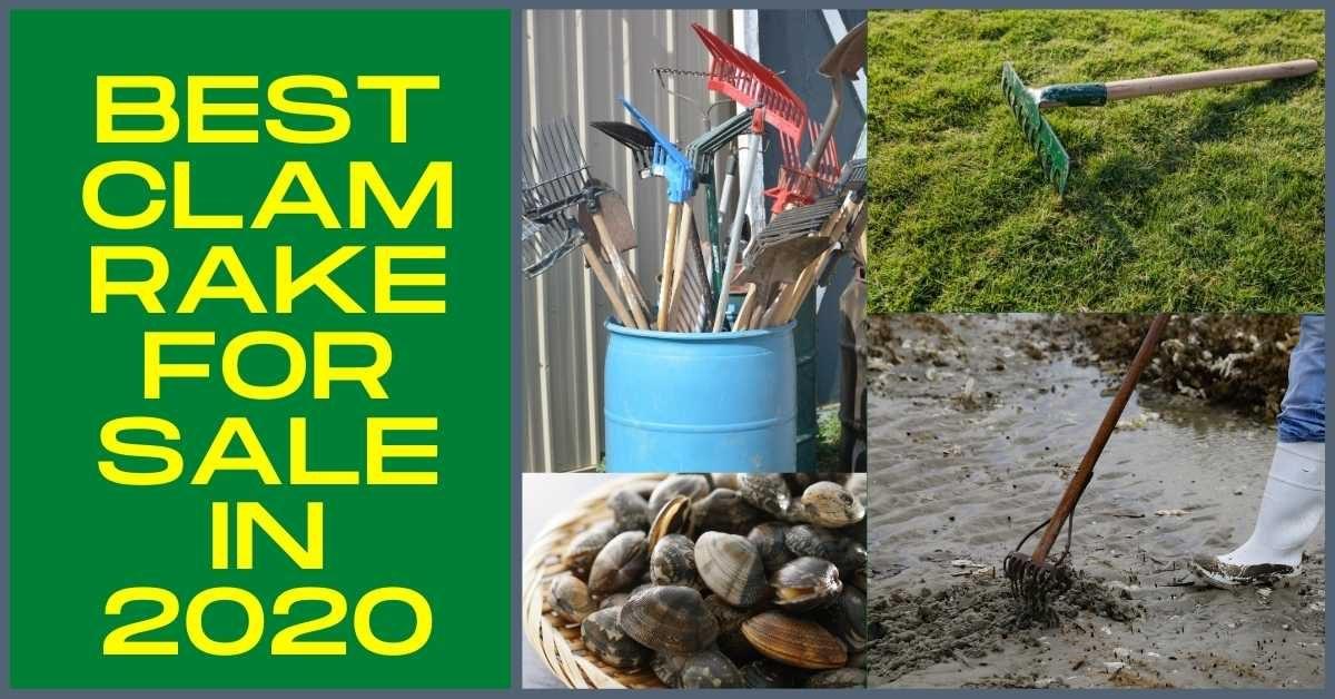 clam rake for sale