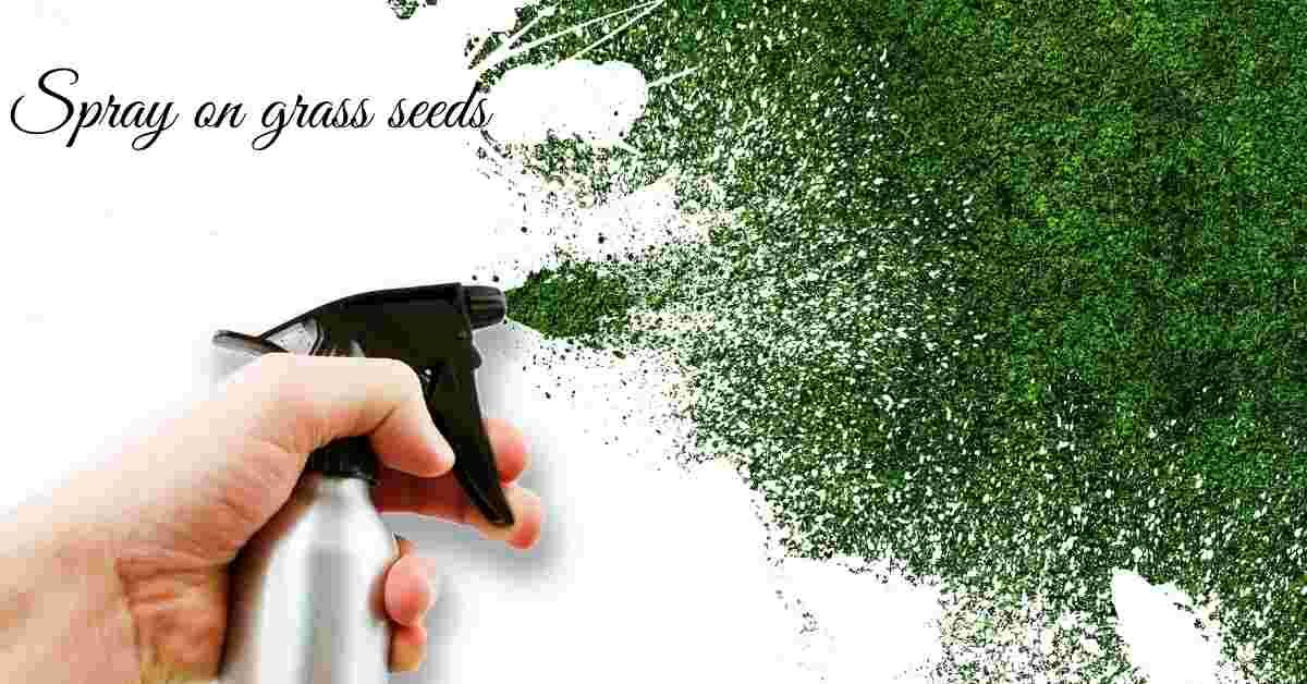 spray on grass seeds