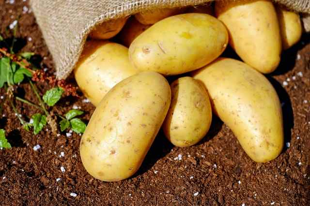 how do you know when potatoes are ready to harvest
