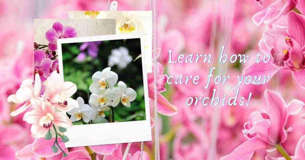 how to care for an orchid