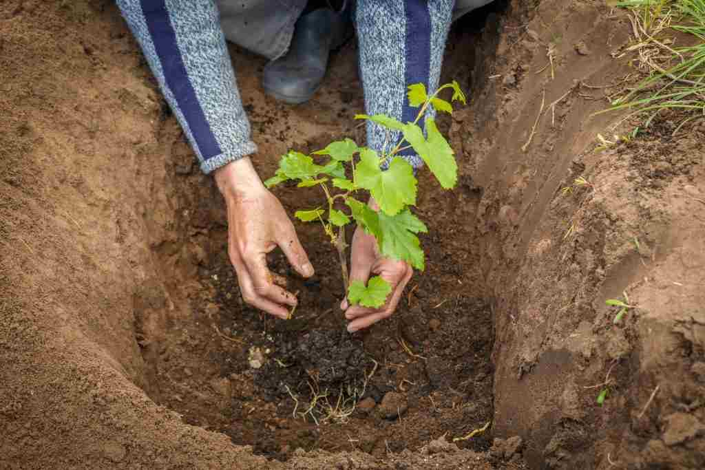how to plant a seed in the ground