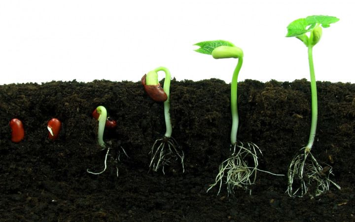 plant seeds at home